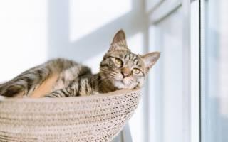 Когда колоть окситоцин кошке природах