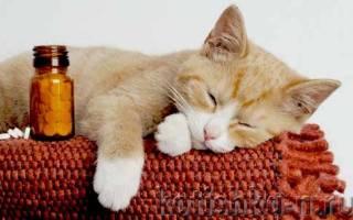Как дать кошке таблетку или жидкое лекарство