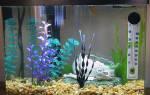 Как выбрать грунт для аквариума?