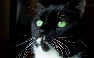 Прививка от бешенства кошке: когда делать