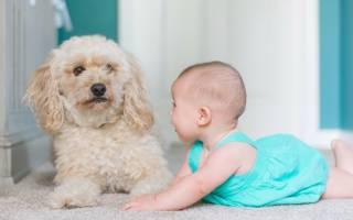 Собака и ребенок в доме: что нужно знать?