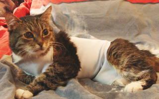 Рак у кошки: симптомы и лечение
