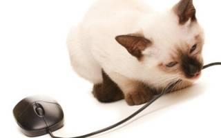 Почему кошка грызет провода, как отучить
