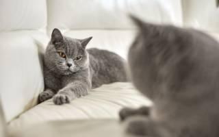 Жизнь кошек после стерилизации