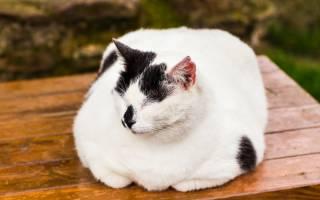 Почему кот хрипит когда дышит