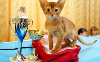 Выставка породистых кошек
