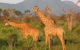 Заповедники в Африке какой самый крупный