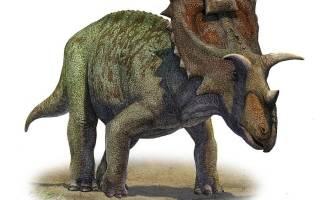 Травоядные динозавры образ жизни цератопсов