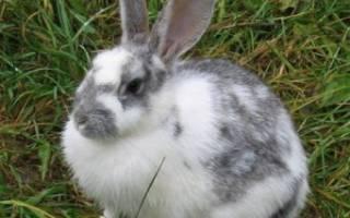 Внутренние органы кролика строение названия