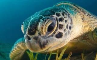 Как назвать красноухую черепаху — Domdrug