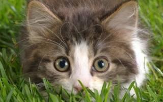 Ринит у кошек безопасные средства для лечения