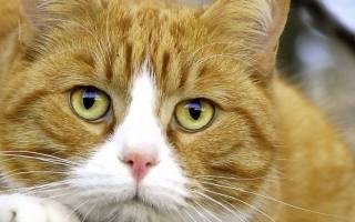 Как происходит внутриутробное развитие котят