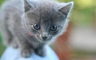 Как необычно назвать кошку