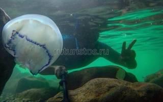 Медузы не дают отдыхающим в Крыму купаться