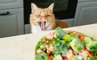 Какие овощи можно давать кошкам