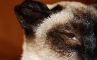 Виды гематом у кошек первая помощь и лечение