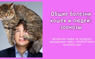 Зоонозы болезни общие для кошки и человека