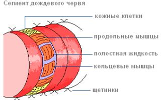 Образ жизни и виды дождевых червей