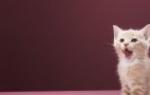 Как накормить кота если он не ест