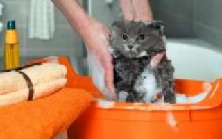 Какой шампунь от блох и клещей для кота лучше