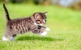 Как приучить котят к имени