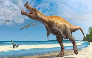 Самые интересные факты о динозаврах