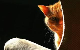 Почему у кота сильно пахнет моча