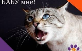 Кастрация котов вред или польза