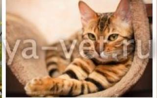 Анализ мочи у кошек расшифровка нормы