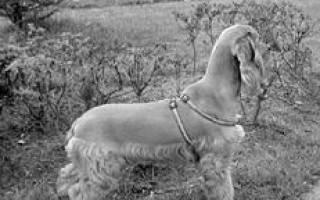 Купание щенка и уход за шерстью