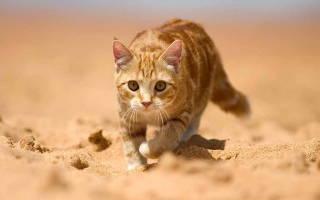 Коричневая моча у кота — причины и что делать
