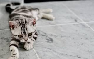 Виды обезболивающих препаратов для кошек