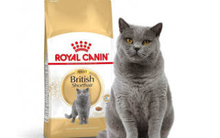 Каким кормом кормить британскую кошку?