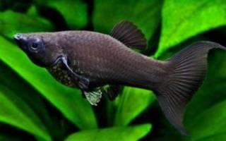 Какие рыбки могут жить в одном аквариуме
