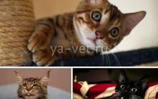 У кошки рвота и понос что делать и чем лечить