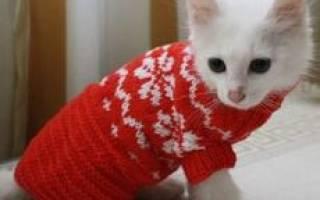 Как связать жилет кошке