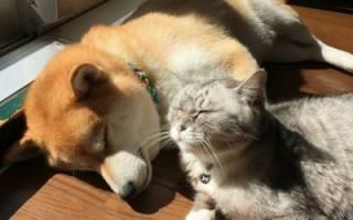 Чем кошачий корм отличается от собачьего