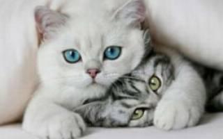 Лучшие породы кошек для детей – Болен кот