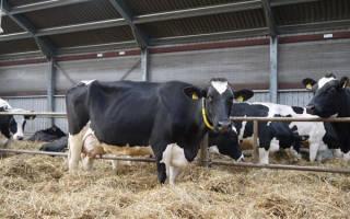 Новые технологии в молочном животноводстве
