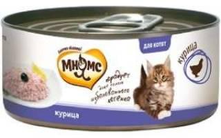 Что важно знать при выборе корма для кошек?