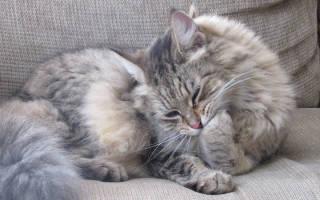 Выведение шерсти из желудка кошки и кота