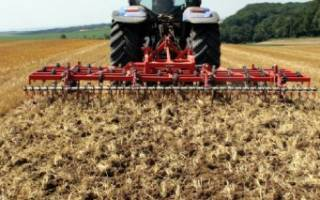 Рацион КРС кукуруза на силос