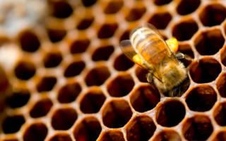 Интересные факты о пчелах — 24СМИ