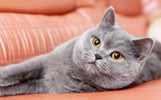 Почему кошка чихает причины лечение