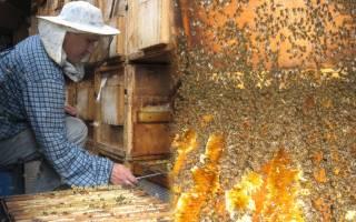 Сколько стоит семья пчел