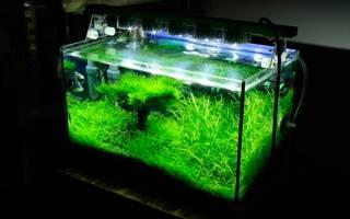 Как сэкономить на освещении аквариума