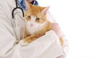 Заболевания мочевыделительной системы у кошек