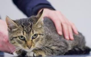 Что делать если у кошек сальмонеллез