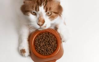 Какие корма для длинношерстных кошек лучше