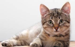 Как делается стерилизация кошек